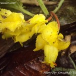 Flora Banos Ecuador