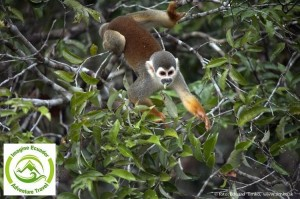 monkey, puyo, tena